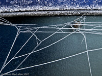 Frozen Spider and Web