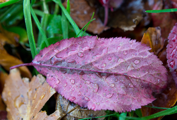 Leaf and water droplets